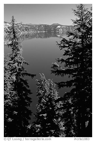 Trees and Lake. Crater Lake National Park (black and white)