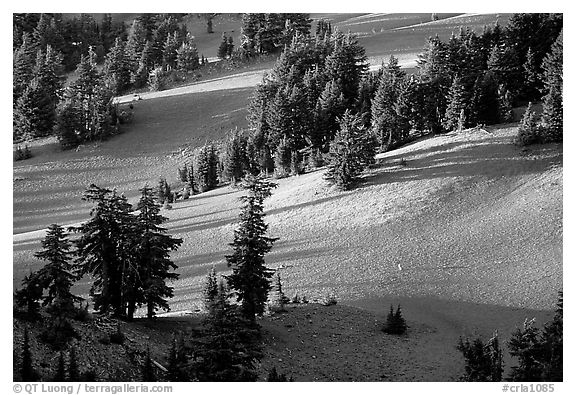Volcanic hills and pine trees. Crater Lake National Park (black and white)