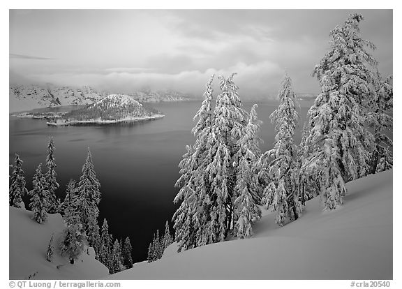 Trees, Wizard Island, and lake, winter dusk. Crater Lake National Park (black and white)