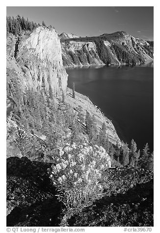Sage flower and cliff. Crater Lake National Park (black and white)
