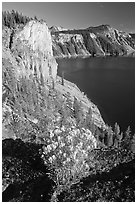 Sage flower and cliff. Crater Lake National Park, Oregon, USA. (black and white)