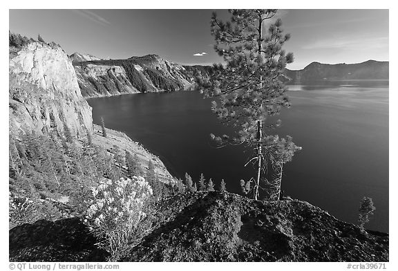 Flowers, cliff, and lake. Crater Lake National Park (black and white)