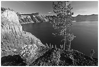 Flowers, cliff, and lake. Crater Lake National Park, Oregon, USA. (black and white)