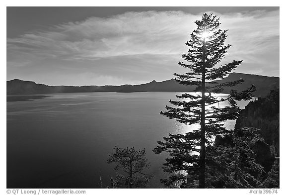 Black And White Picturephoto Lake And Sun Shining Through Pine