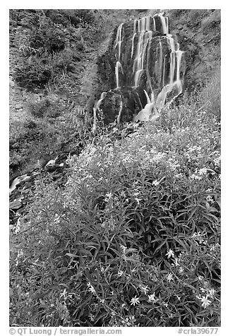 Vidae Falls and wildflowers. Crater Lake National Park (black and white)
