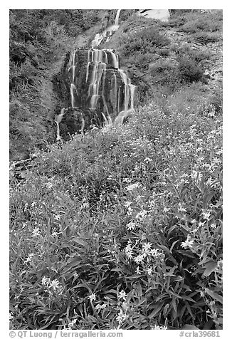 Wildflowers and Vidae Falls. Crater Lake National Park (black and white)