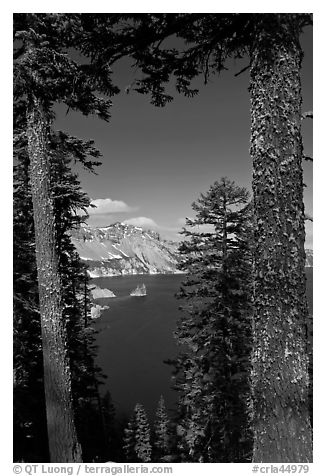 Lake seen between pine trees. Crater Lake National Park (black and white)