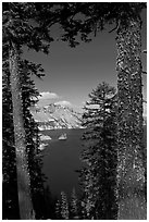 Lake seen between pine trees. Crater Lake National Park, Oregon, USA. (black and white)