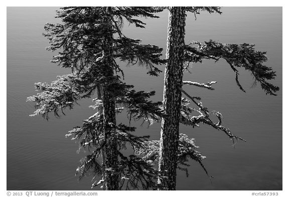 Two tree trunks with lichen profiled agains blue waters, Wizard Island. Crater Lake National Park (black and white)