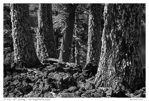 Lava rocks and Western Hemlock trees with lichen, Wizard Island. Crater Lake National Park (black and white)