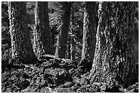 Lava rocks and Western Hemlock trees with lichen, Wizard Island. Crater Lake National Park ( black and white)