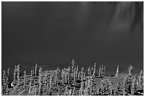 Hemlock trees on lava rocks bordering blue waters of Skell Channel, Wizard Island. Crater Lake National Park ( black and white)