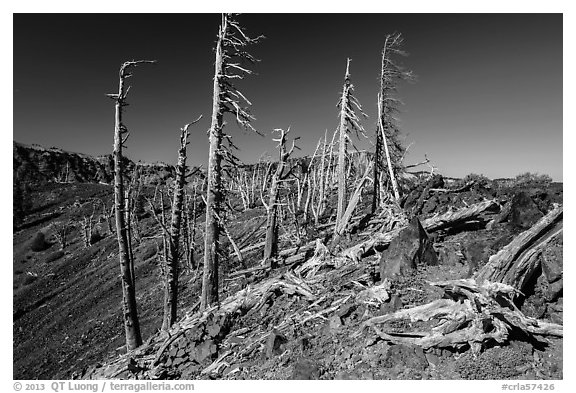 Grove of Whitebark pines on top of Wizard Island cinder cone. Crater Lake National Park (black and white)