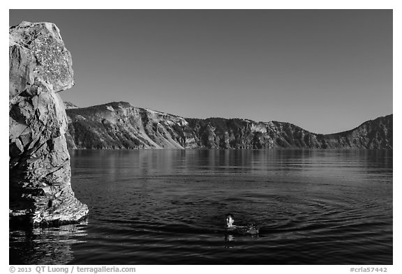Man swimming in lake, Cleetwood Cove. Crater Lake National Park (black and white)