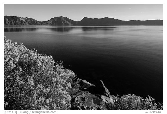 Rabbitbrush in late summer, Cleetwood Cove. Crater Lake National Park (black and white)