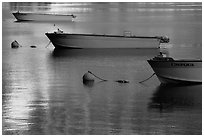 Tour boats and golden reflections, Cleetwood Cove. Crater Lake National Park ( black and white)