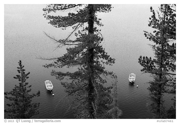 Tour boats seen between trees, Cleetwood Cove. Crater Lake National Park (black and white)