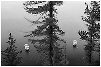 Tour boats seen between trees, Cleetwood Cove. Crater Lake National Park ( black and white)