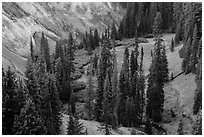Godfrey Glen. Crater Lake National Park ( black and white)