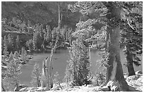 Pines and Rae Lake. Kings Canyon National Park, California, USA. (black and white)