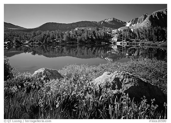 Wildflowers and Woods Lake, morning. Kings Canyon National Park (black and white)