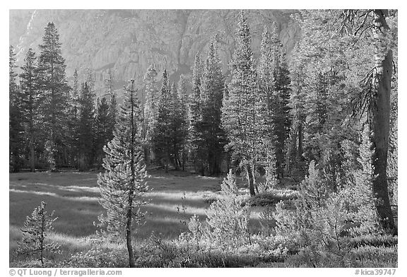 Big Pete Meadow, late afternoon, Le Conte Canyon. Kings Canyon National Park (black and white)