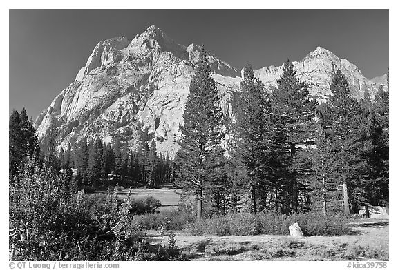 Langille Peak and pine trees, Big Pete Meadow, Le Conte Canyon. Kings Canyon National Park (black and white)