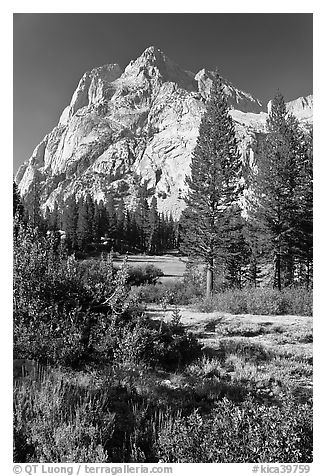 Trees and Langille Peak, Big Pete Meadow, Le Conte Canyon. Kings Canyon National Park (black and white)
