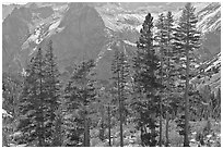 Pine trees and granite peaks. Kings Canyon National Park, California, USA. (black and white)