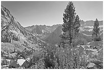 Fireweed and pine trees above Le Conte Canyon. Kings Canyon National Park, California, USA. (black and white)