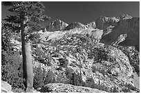 Pine tree and Mt Giraud chain, Lower Dusy basin. Kings Canyon National Park, California, USA. (black and white)
