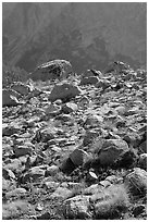 Boulders in meadow and Le Conte Canyon walls. Kings Canyon National Park, California, USA. (black and white)