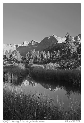 Grasses and mountains reflections, Lower Dusy basin. Kings Canyon National Park (black and white)