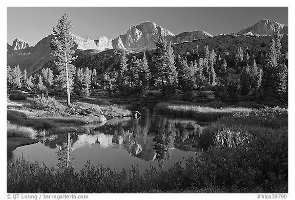 Trees, grasses, calm reflections, Lower Dusy basin. Kings Canyon National Park (black and white)