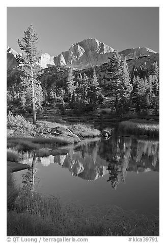 Trees and mountains reflected in calm creek, Lower Dusy basin. Kings Canyon National Park (black and white)