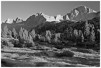 Meadow, trees and mountains, late afternoon, Lower Dusy basin. Kings Canyon National Park, California, USA. (black and white)