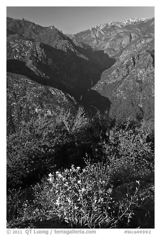 Flowers and Middle Forks of the Kings River. Kings Canyon National Park (black and white)