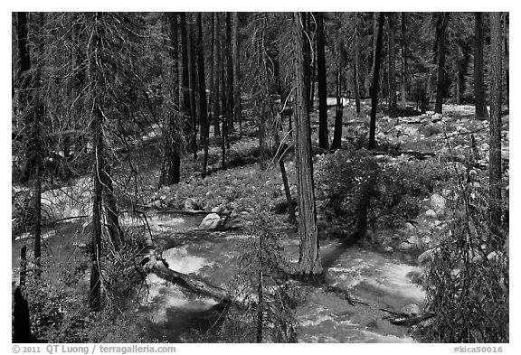 Streams in forest in the spring, Cedar Grove. Kings Canyon National Park (black and white)