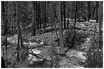 Streams in forest in the spring, Cedar Grove. Kings Canyon National Park, California, USA. (black and white)