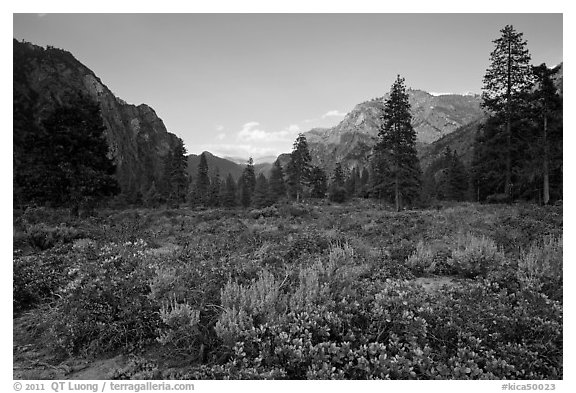 Meadow and cliffs at sunset, Cedar Grove. Kings Canyon National Park (black and white)