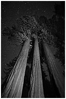 Group of sequoia trees under the stars. Kings Canyon National Park, California, USA. (black and white)