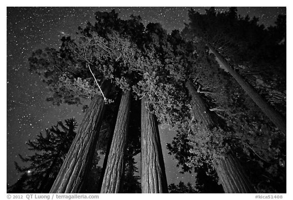 Giant sequoia grove and starry sky. Kings Canyon National Park (black and white)