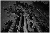 Giant sequoia grove and starry sky. Kings Canyon National Park, California, USA. (black and white)