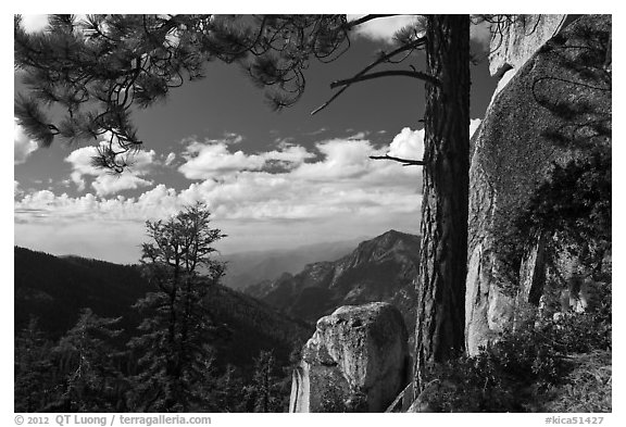 Pine and outcrops, Lookout Peak. Kings Canyon National Park (black and white)