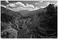 Manzanita branches and Cedar Grove Valley. Kings Canyon National Park ( black and white)
