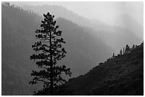 Silhouetted tree and canyon ridges. Kings Canyon National Park, California, USA. (black and white)