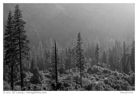 Forest and valley slopes. Kings Canyon National Park (black and white)