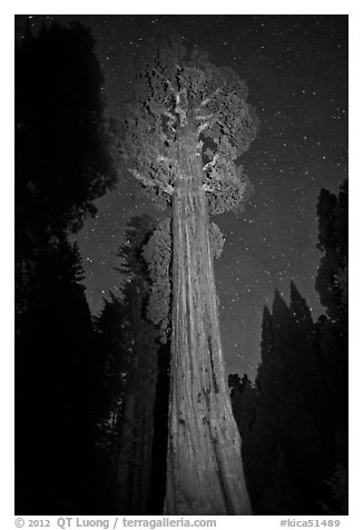 General Grant tree and night sky. Kings Canyon National Park (black and white)