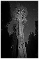 General Grant tree and night sky. Kings Canyon National Park, California, USA. (black and white)