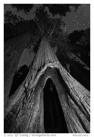 Sequoia tree with opening at base at night, Redwood Canyon. Kings Canyon National Park (black and white)